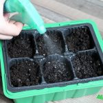 Как посеять жгучий перец на рассаду, чтобы были крепкие и дружные всходы