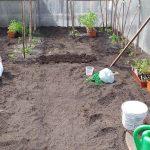 Повышаем плодородие почвы в теплице, делюсь рабочим секретом, чтоб быть всегда с урожаем