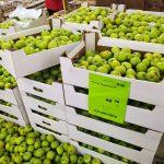Ну за такую низкую цену, я точно куплю яблоки и другие товары в «Светофоре». Обзор.
